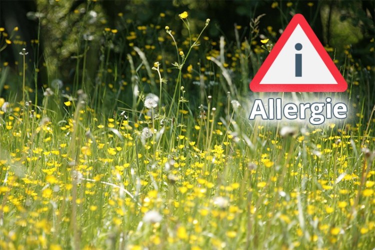 Wiesen sind gefährlich für Pollenallergiker.