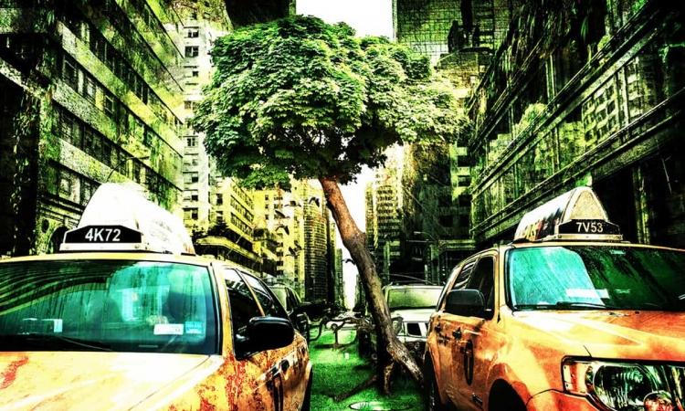 Mehr Grün und weniger Autos in der Stadt